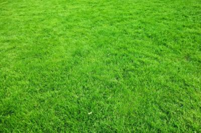 10 Unique Features of Zeon And Emerald Zoysia Sods