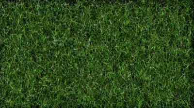 Popular Kinds of Zoysia Sod For Atlanta Lawns (A guide by Atlanta Sod farms)