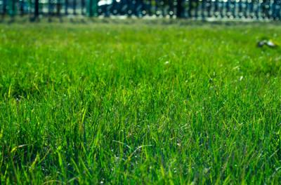 Best Time to Install Sod in Your Lawn