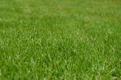 Landscaping Tips: Best Grass for your Lawn
